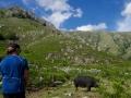 Aux bergeries de Mezzaniva